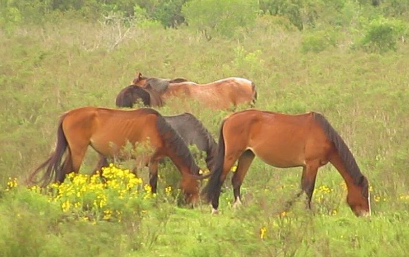 Blutfarmen Pferde